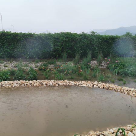 Giardini pluviali Santorso (3)